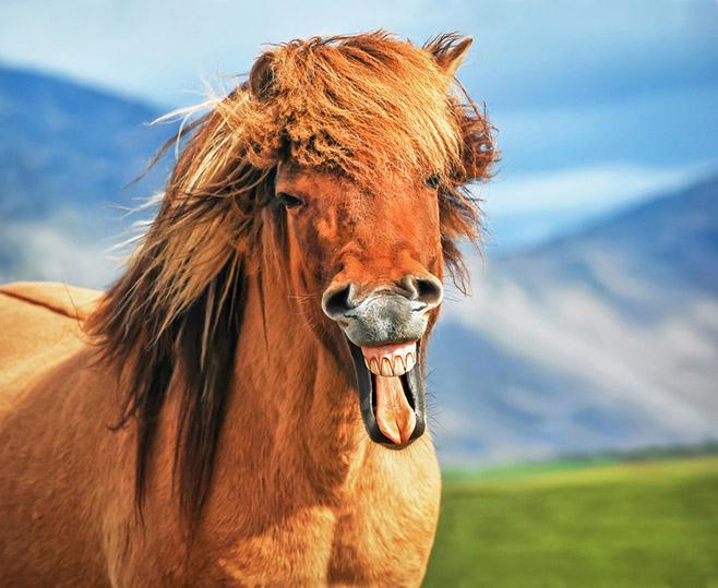 Gar nicht so einfach, das Pferd zum Lachen zu bringen und dann auch noch in genau dem richtigen Moment den Auslöser zu drücken