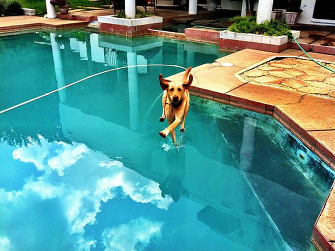 Federleichter Hund