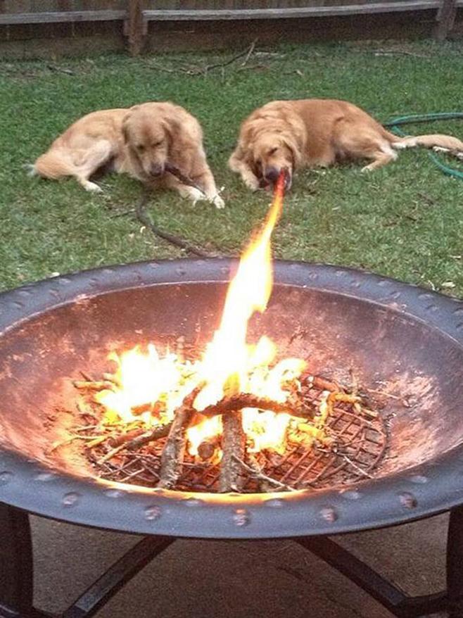 Hund speit Feuer