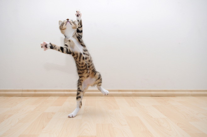 Perfekte Haustier-Fotografie