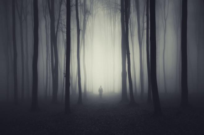 Mystische Stimmung im Nebelwald