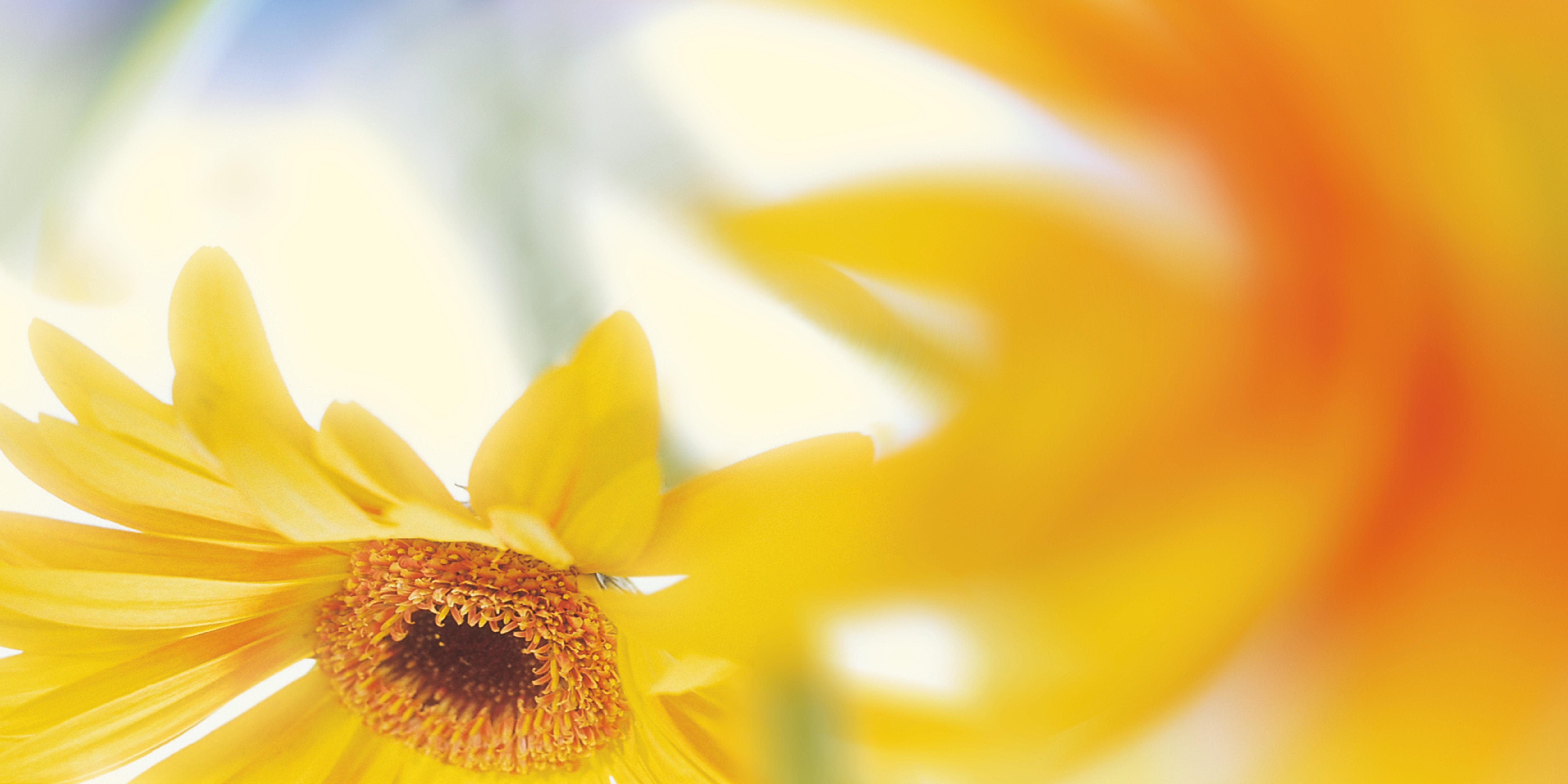 Hintergrundbilder und vorlagen zum thema natur